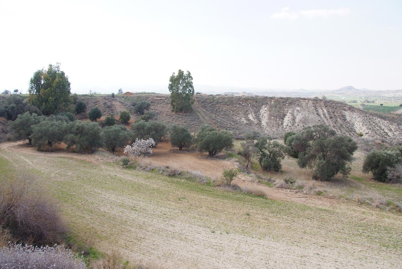 olives_05